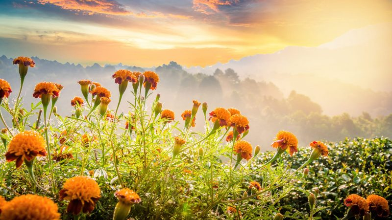 Nice Poems About Nature