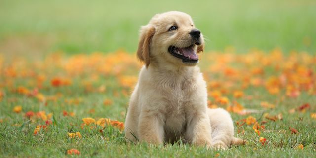 pet-names-for-puppies-dog